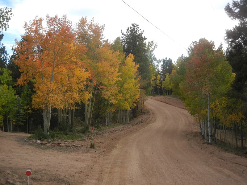 Fall Aspens on Lower part of property