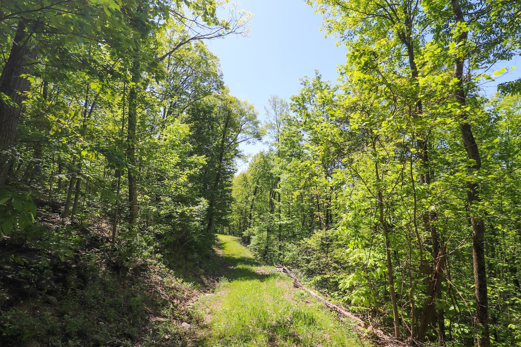 Wooded Recreational Land for Sale in Floyd VA!