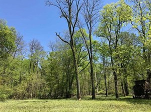 NEARLY 600 ACRES OF HUNTING LAND FOR SALE NEAR HOPE, AR