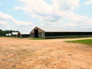 6 HOUSE POULTRY BROILER FARM FOR SALE SW MS