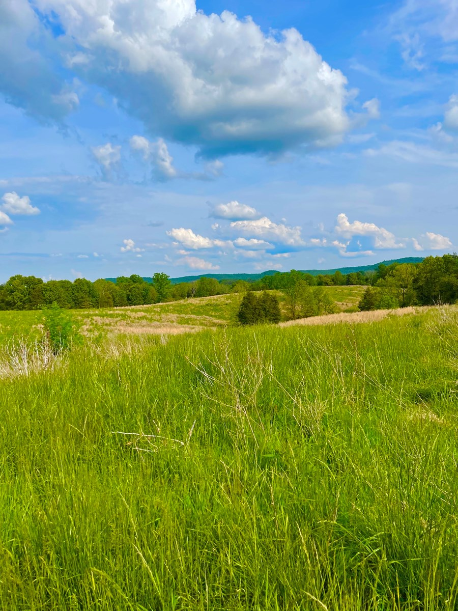 Ky Cattle, Hunting or Recreational Land for sale, Fleming Co