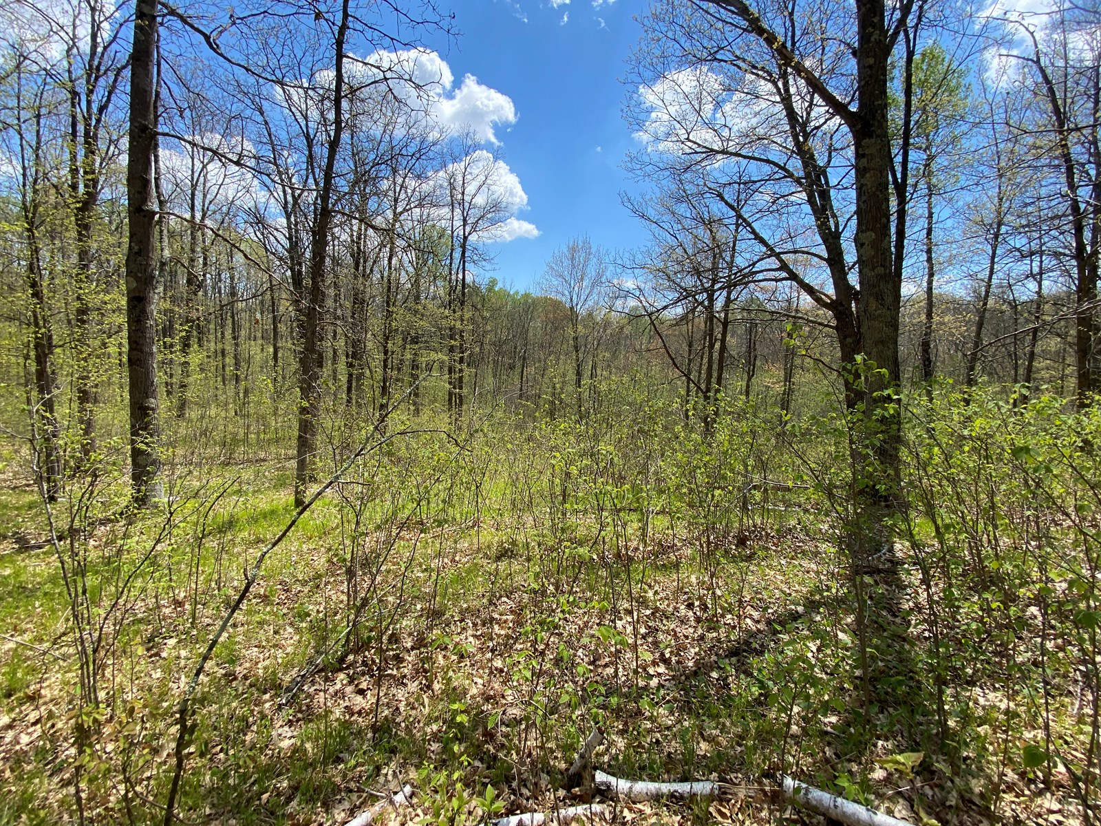40 Acres Of Hunting Land For Sale Near Sandstone MN