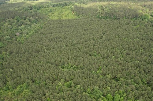 Hunting Land For Sale Simpson County Pinola Mississippi