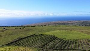KAU COFFEE PLANTATION & FARMLAND FOR SALE IN HAWAII