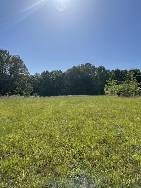 Arkansas Land For Sale 12 acres +/-