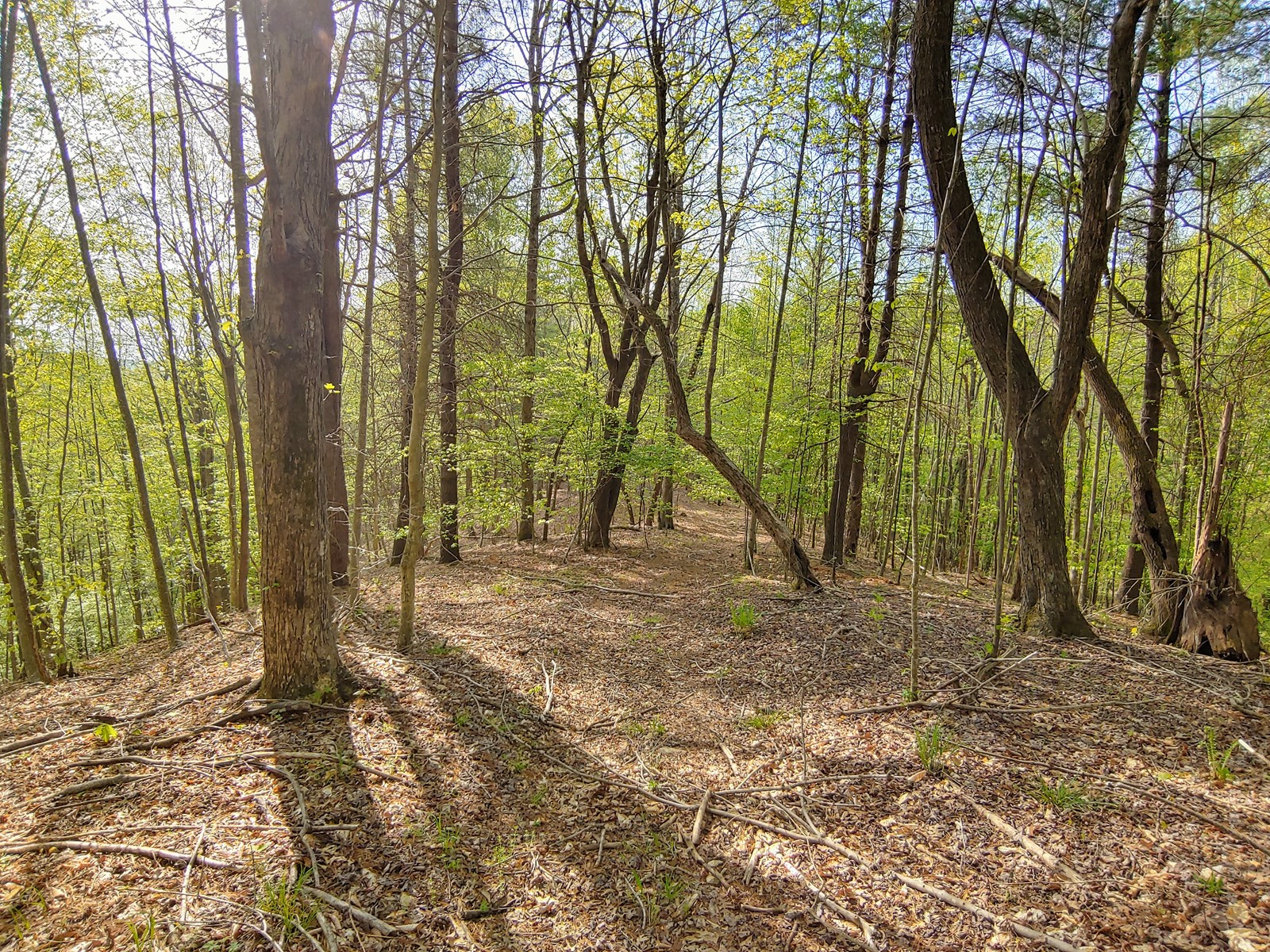 Wooded Land for Sale in Ferrum VA