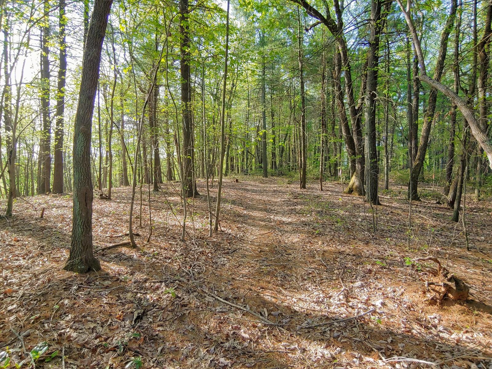 Mountain Land for Sale in Ferrum VA