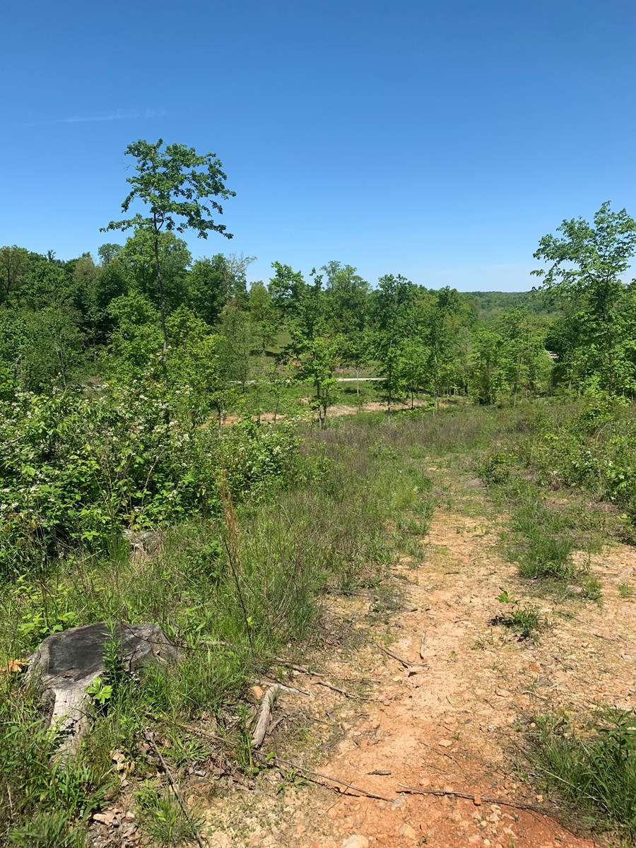 Northern Bollinger County Missouri Land for sale