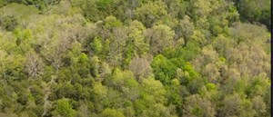158 ACRE FARM WITH LARGE CREEK IN EAST TENNESSEE FOR SALE