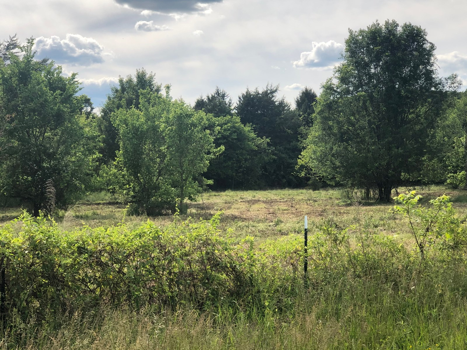 7.32 Surveyed Acres in Hawkins Co., TN For Sale