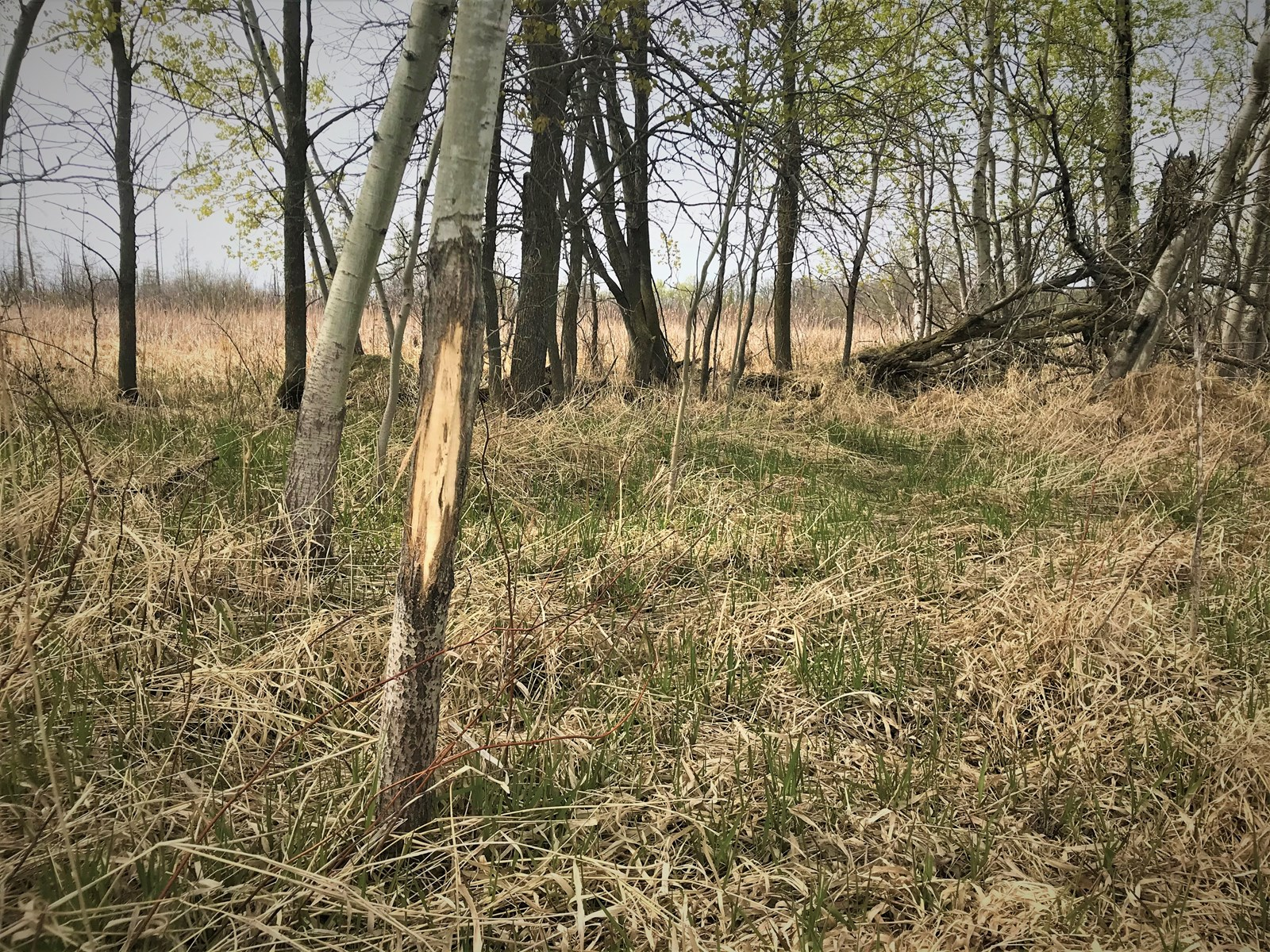 48 Acre Hunting Property in Todd County Minnesota!