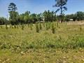 Buildable lot for sale in Bristol Florida