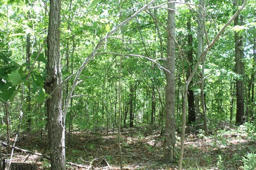 Land for Sale with Acreage for Sale in Linden, Tennessee