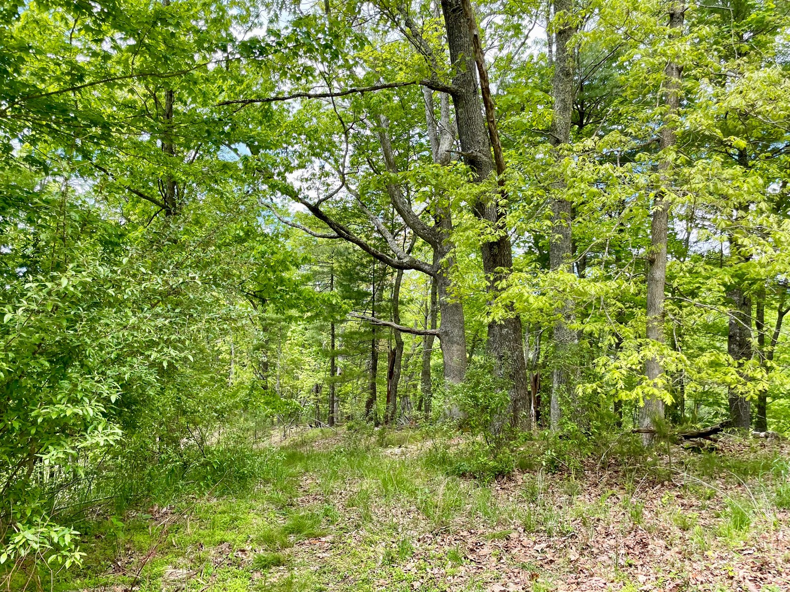 Wooded Property for Sale in Floyd County VA