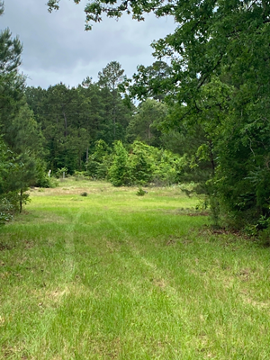 SECLUDED HOMESITE LOCATION FOR YOUR FAMILY TO ENJOY.