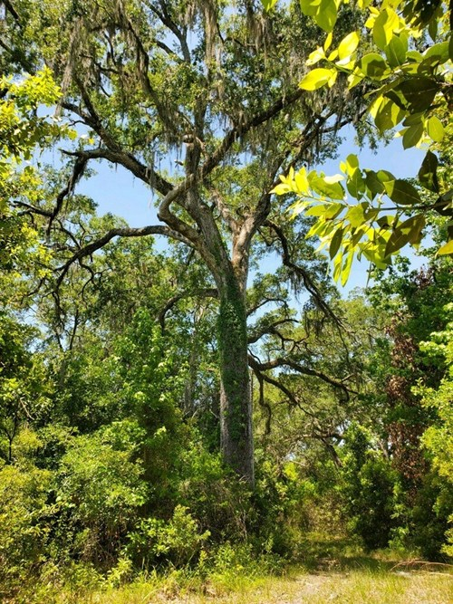 461 ac. Tract Perfect For Development