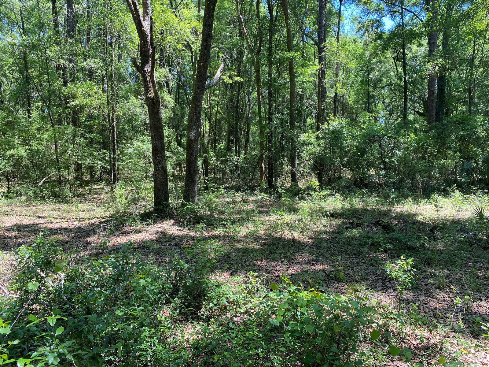 RBEAUTIFUL RIVER SUBDIVISION LOT FOR ONLY $15,000!!!