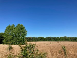 57 ACRES OF LAND FOR SALE IN WARD, ARKANSAS