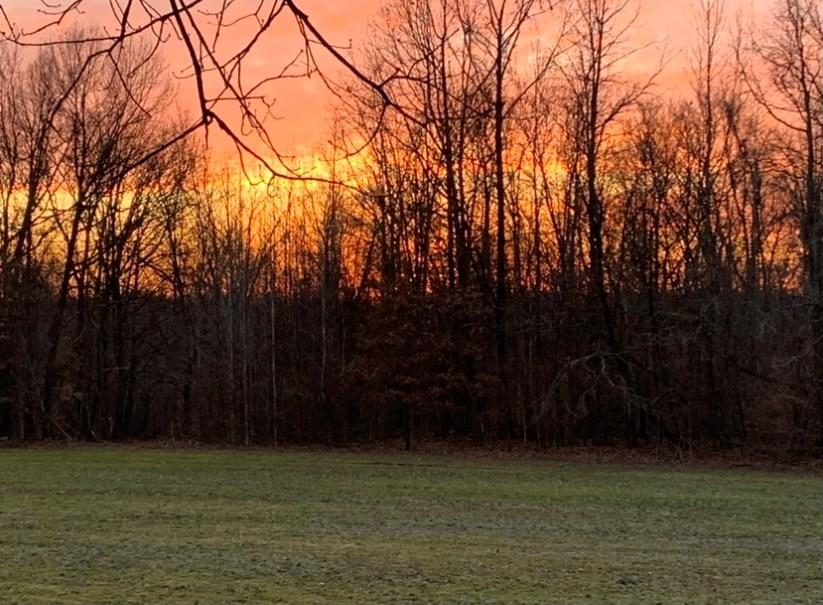 Madison County Farm For Sale 144 Acres Jackson, TN