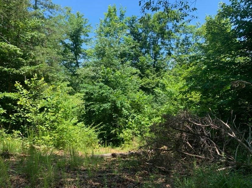 0.3969 +/- acres near Dale Hollow Lake