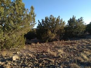 SELIGMAN AZ BEAUTIFULLY TREED NEAR HUNTING STATE TRUST LAND