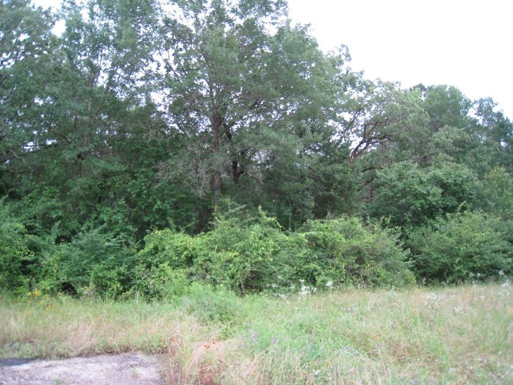 UNRESTRICTED LAND FOR SALE IN EAST TX | FRANKSTON TX