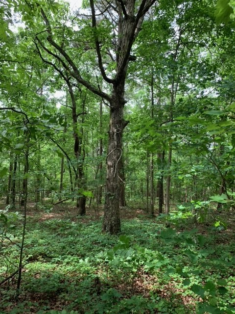 5 Wooded Acres For Sale Searcy County Arkansas