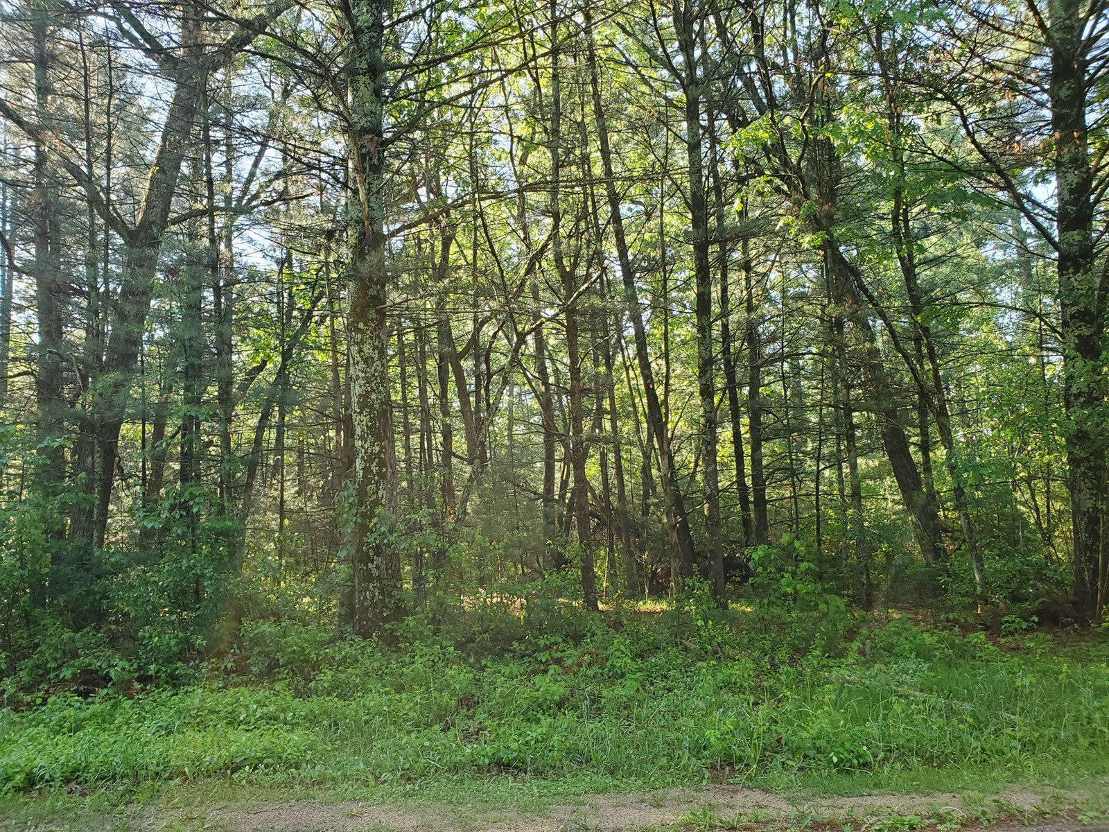 Vacant Lot For Sale In Waupaca County