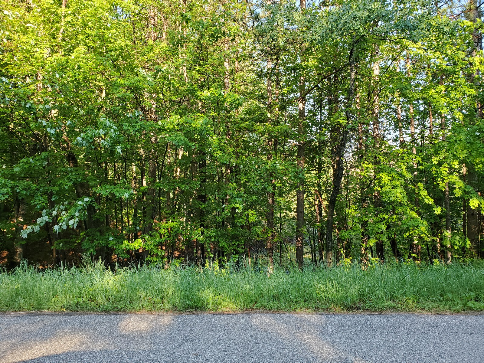 Wooded Lot In Waupaca Co For Sale