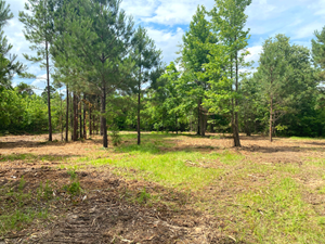 EAST TEXAS LAND FOR SALE
