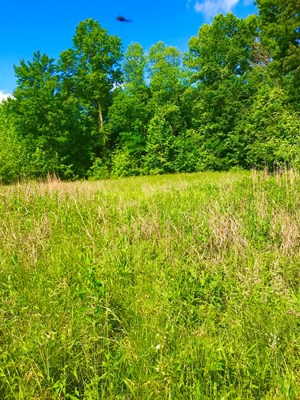 LAND FOR SALE- HUNTING, RECREATIONAL AND HOMESITE, BATH CO