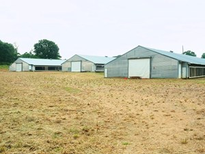 4 HOUSE BROILER POULTRY FARM FOR SALE FOREST COUNTY, MS