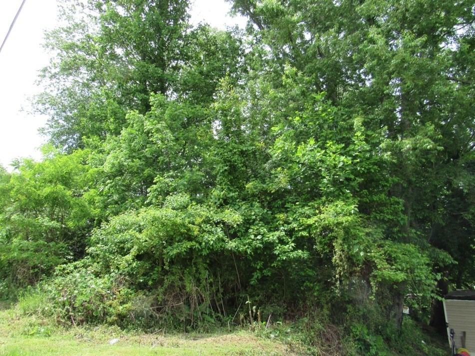 Wooded Building Lot for Sale in Meadowview VA