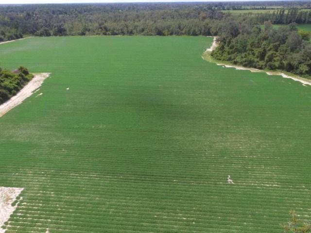 Hunting and farm land in Grand Ridge Florida