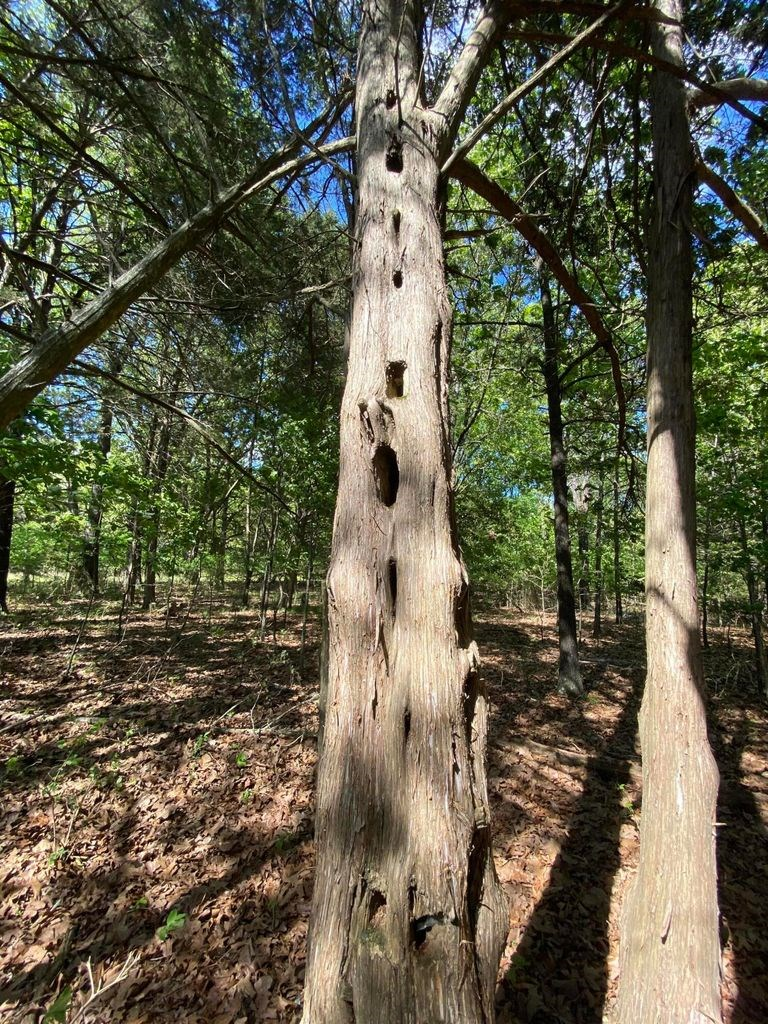 2.05 Acre Lot in Gated Community on Bull Shoals Lake