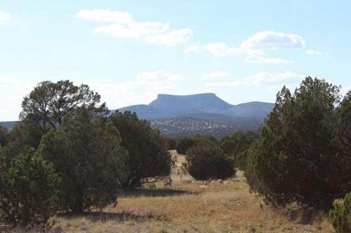 Beautiful Views Backing Up to State Land.