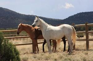 HORSE PROPERTY FOR SALE NORTHERN ARIZONA BORDERS PUBLIC LAND
