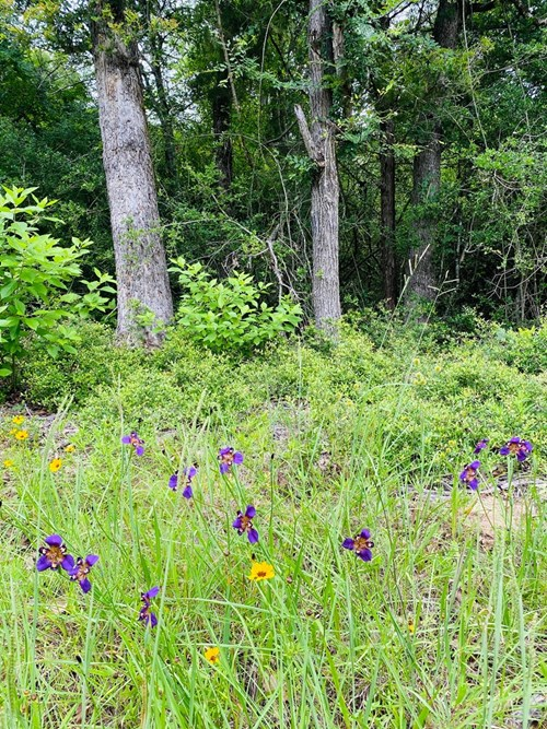UNRESTRICTED 6.04 ACRES IN LEON COUNTY