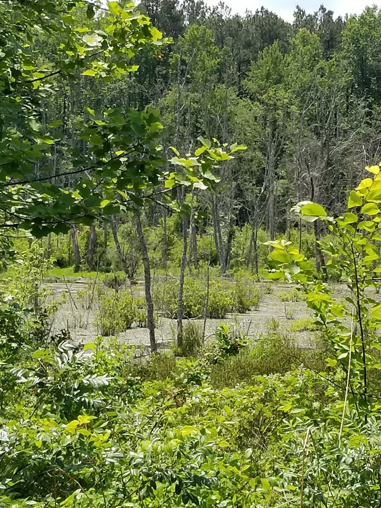 Hunters Wanted For Land In Southern VA