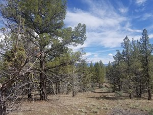 RURAL ACREAGE FOR SALE IN NORTHERN, CA