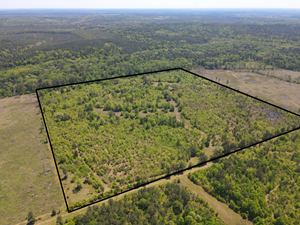 EAST TEXAS HUNTING LAND FOR SALE
