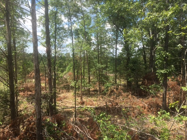 LAND FOR SALE NORTH OF CALICO ROCK, ARKANSAS