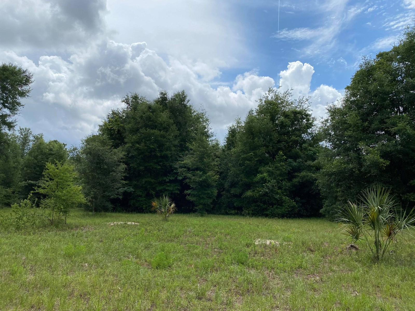 5 ACRES IN BEAUTIFUL BELL FLORIDA!