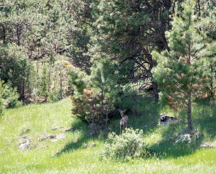 SD Deer Hunting Property.jpeg