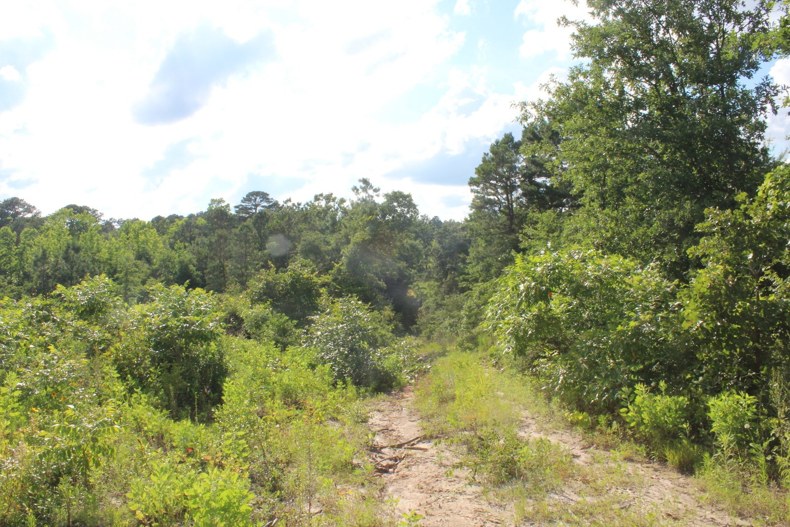 WOODED EAST TEXAS WOOD COUNTY LAND FOR SALE 23.5 ACRES