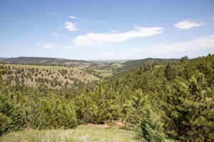 SD BLACK HILLS RANCH AND RECREATIONAL LAND FOR SALE