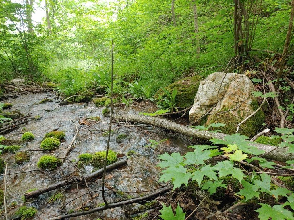Mountain Land for Sale in Callaway VA