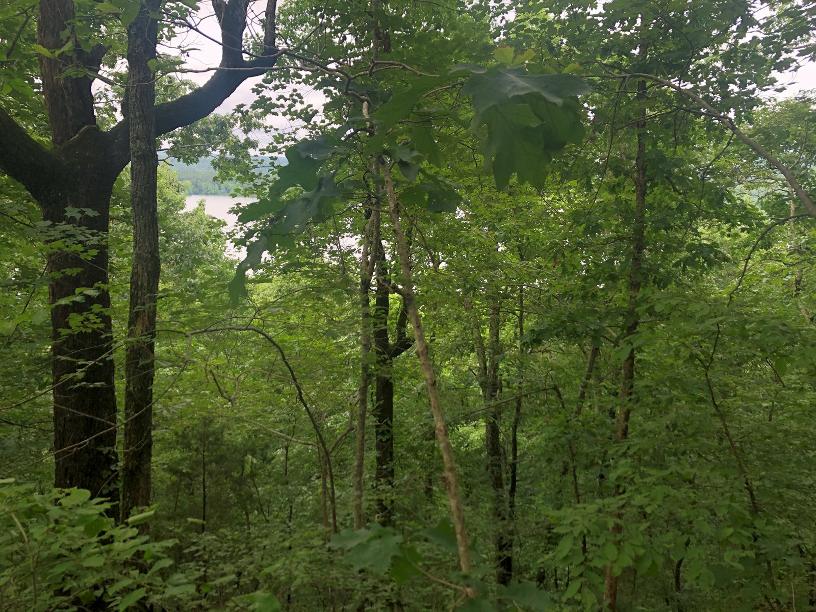 Greers Ferry Lakefront Lot for Sale Near Choctaw Arkansas