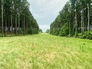 304 ACRE HUNTING TIMBER LAND FOR SALE AMITE COUNTY MS