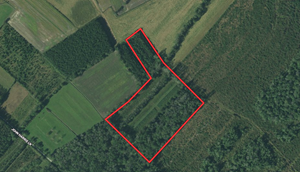 HUNTING TRACT FOR SALE IN PITT COUNTY, NC